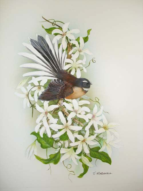 Google Image Result for http://www.mindpowercourse.com/Pied%2520Fantail%2520on%2520NZ%2520clematis.JPG
