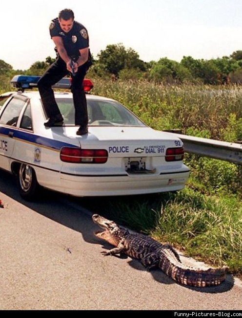 Where is the Gator Boys when you need them ?!