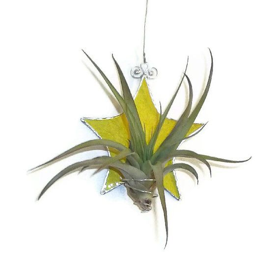 Stained Glass Air Plant Holder Yellow Star by RavensStainedGlass