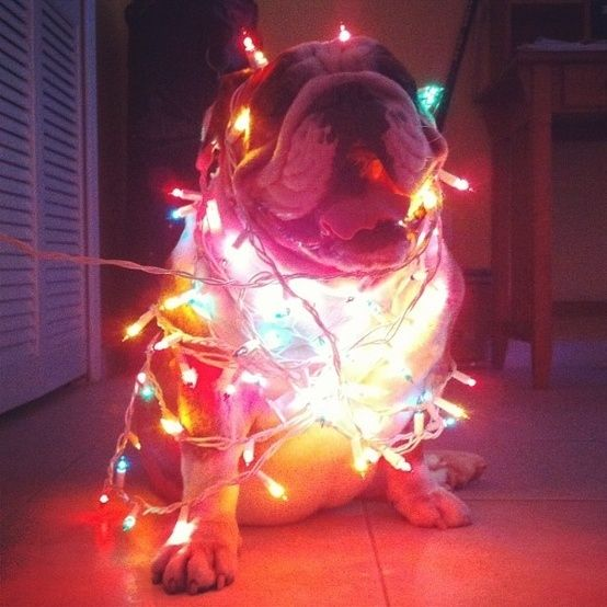 This had been the original plan for my Christmas card...except my bullies wouldn't cooperate.