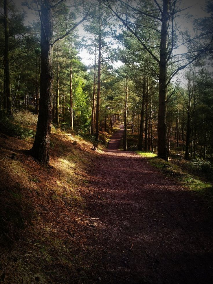 Whinfell Forest by *StrandedAutumn on deviantART