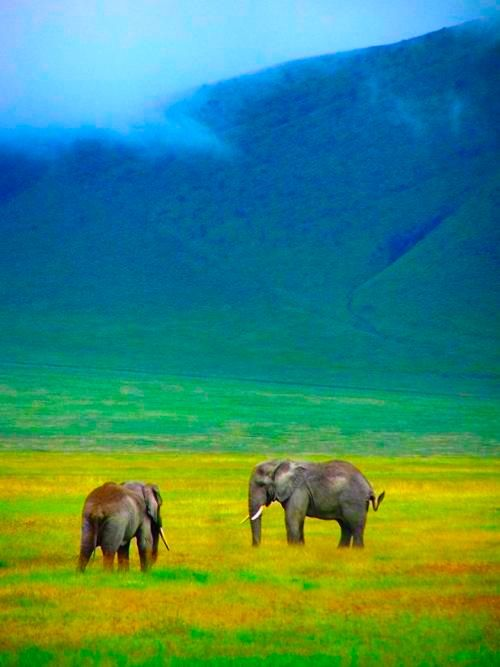 : Wild Animal, Nature Beauty, Wildlife Photography, Ngorongoro Crater, Beauty Creatures, National Parks, Place, Tanzania, Riding An Elephants