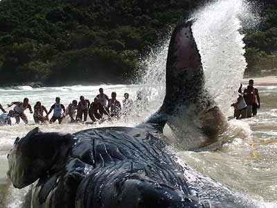 Teens Activist of the World Society. : Ballena varada en playa irlandensa muere .. El 16 de Enero a las 7:51 am Fue un triste final para el rorcual común joven, que se encuentra atrapado en un banco de arena, ese día por la mañana. Aunque su cadáver quedó en la orilla, al parecer de duelo por un solo navegante, esta ballena no murió sin luchar. Sus últimas horas fueron testimonio de la unión entre uno de los animales más grandes de la Tierra y la humanidad - como hasta 500 personas acudieron…