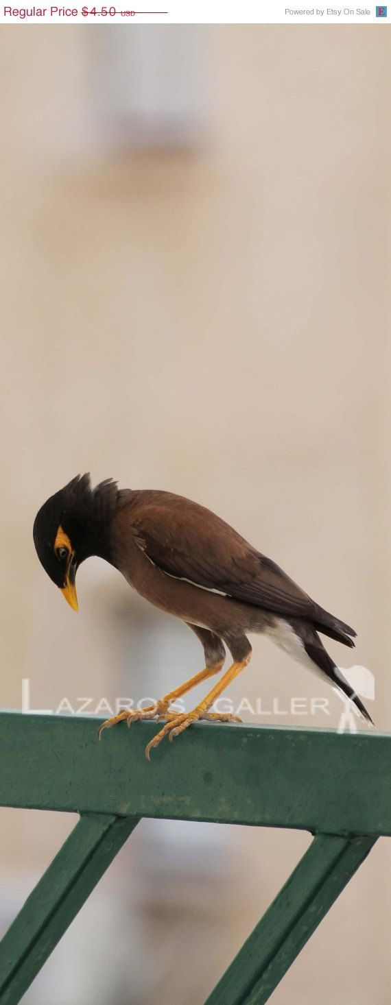 A myna bird visiting our garden digital photo. by LazaroGallery