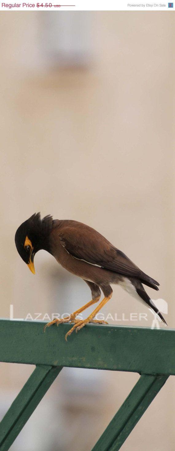 A myna bird visiting our garden digital photo. by LazaroGallery