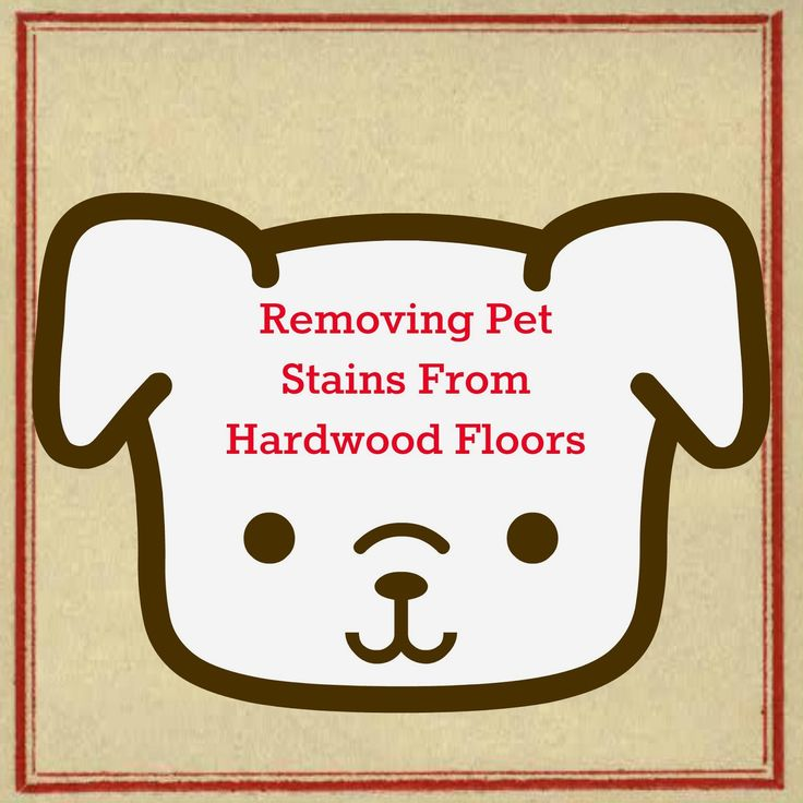 Cleaning Hardwood Floors - how to remove dog, cat, and other pet stains from hardwood floors. #cleaning #pets