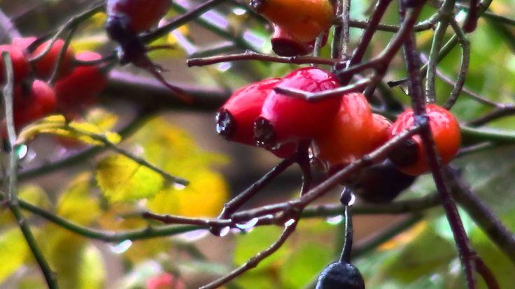 Осенний дождь *♫*♥* КРАСКИ ОСЕНИ *♫*♥*