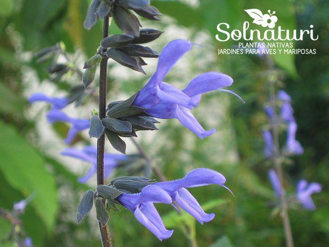 17 mejores ideas sobre plantas nativas en pinterest for Vivero plantas nativas