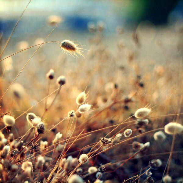 летние фотографии fragilesimplicity (с)