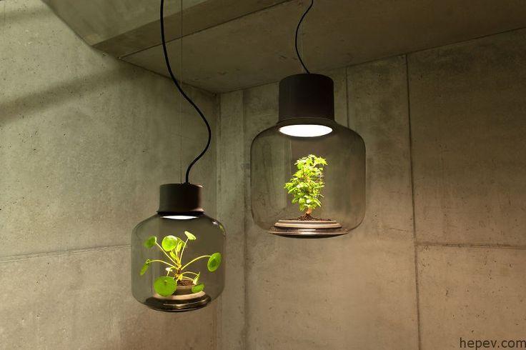 İçinde Canlı Bitkiler Olan İlginç Lambalar - http://hepev.com/icinde-canli-bitkiler-olan-ilginc-lambalar-6465/