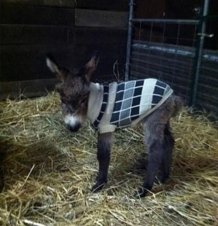And I need this little donkey.