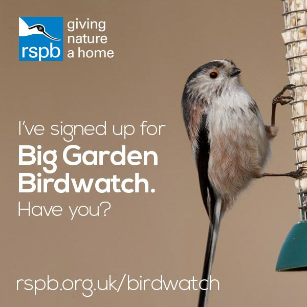 Big Garden Birdwatch saw 8.2 million birds counted last year! Can we beat it in 2017?