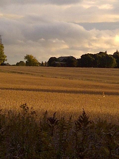 West Gwillimbury