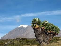 КИЛИМАНДЖАРО: ПРЕОДОЛЕВАЕМ ТРУДНОСТИ ВМЕСТЕ  2.11.2016 г. О бизнесе и не только. Страны и континенты. В Танзании расположена удивительная гора – Килиманджаро, совершить восхождение на которую