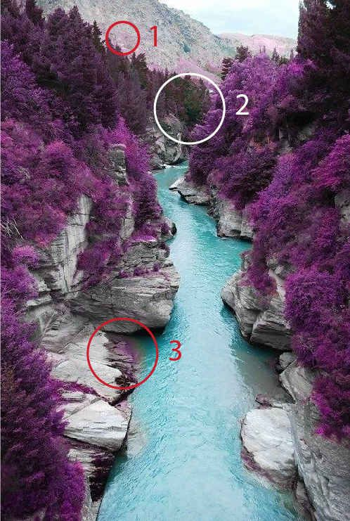 "The ""purple trees"" in Fairy Pools, Scotland."