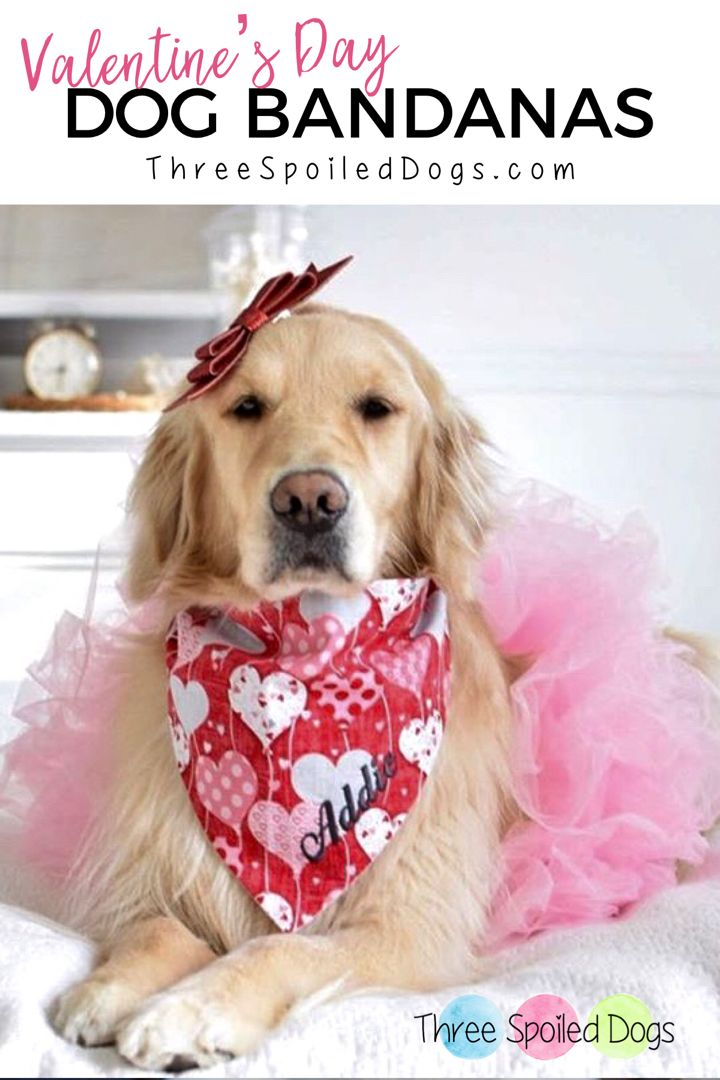 Personalized Pet Accessories Dog Bandanas Dog Beds Best Custom