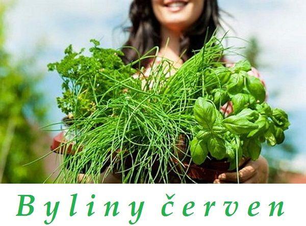 bylinky cerven bylinky a rostliny sbirane v cervnu