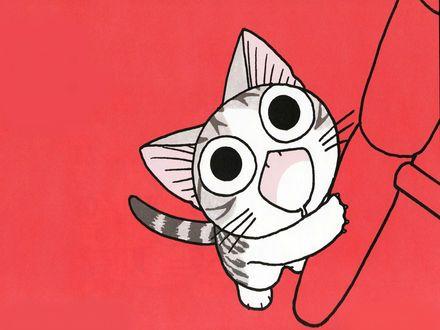 Картинки по запросу котенок чи повис