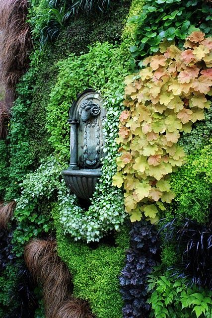 Sheeps-head fountain in a wall of climbing ivy and other greenery