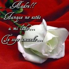 Una flor para mi madre ausente