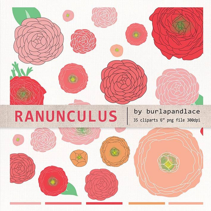 Hand draw clipart flower cliparts, ranunculus flower clipart, ranunculus flower clipart, coral red, red, rose, orange, wedding clipart by 1burlapandlace on Etsy https://www.etsy.com/listing/181601166/hand-draw-clipart-flower-cliparts