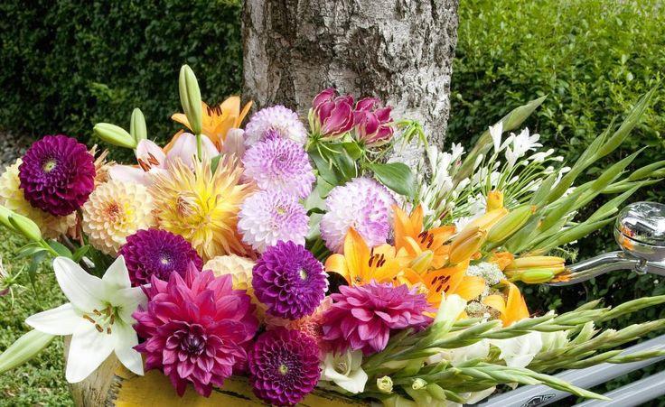 Dahlien sind, wie Lilien und Gladiolen, gute Schnittblumen. Es lohnt sich deshalb, auch ein Beet mit Dahlien für den Schnitt zu pflanzen. (Dahlien, Agapanthus, Gladiolen, Gloriosa, Lilien)