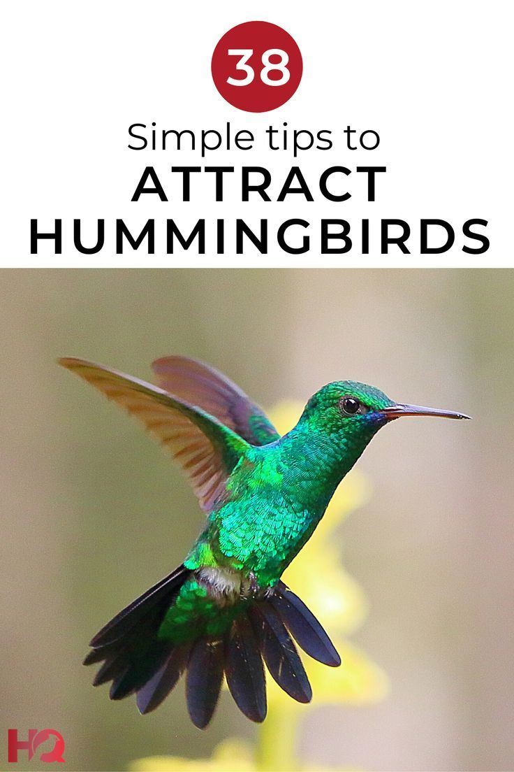 How To Attract Hummingbirds 38 Simple Tips (2020 Guide