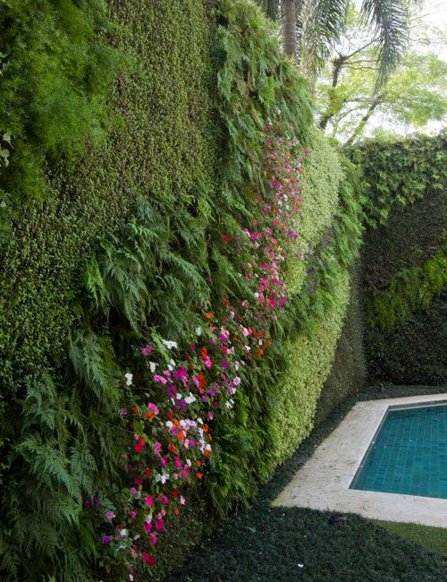 Vertical gardening. The idea of combining dense species with one another can yield an awesome effect
