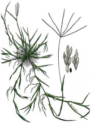 10 Worst Garden Weeds