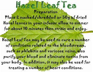 Prepper & Survival Free Information Vault: Hazel Leaf Tea