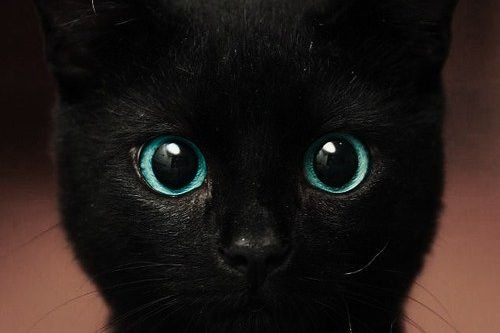 What is Curiosity? Does it kill our inner cats with satisfaction?