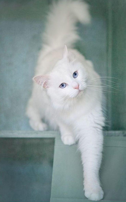 10 best 52 evol images on Pinterest | Dog cat, Fluffy kittens and ...