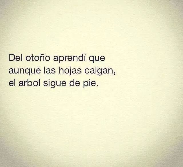 105 best images about frases on pinterest no se meaning for El arbol que no tiene hojas