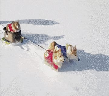 Dogs Sledding...literally!