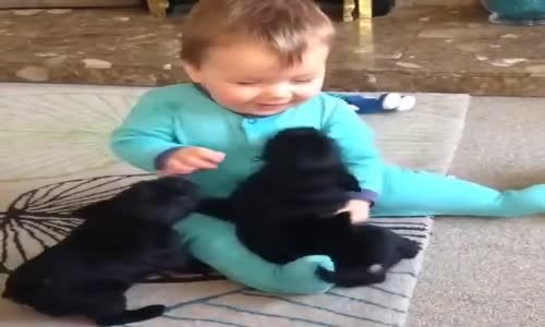 What happens when puppies puppy meet with a baby ?