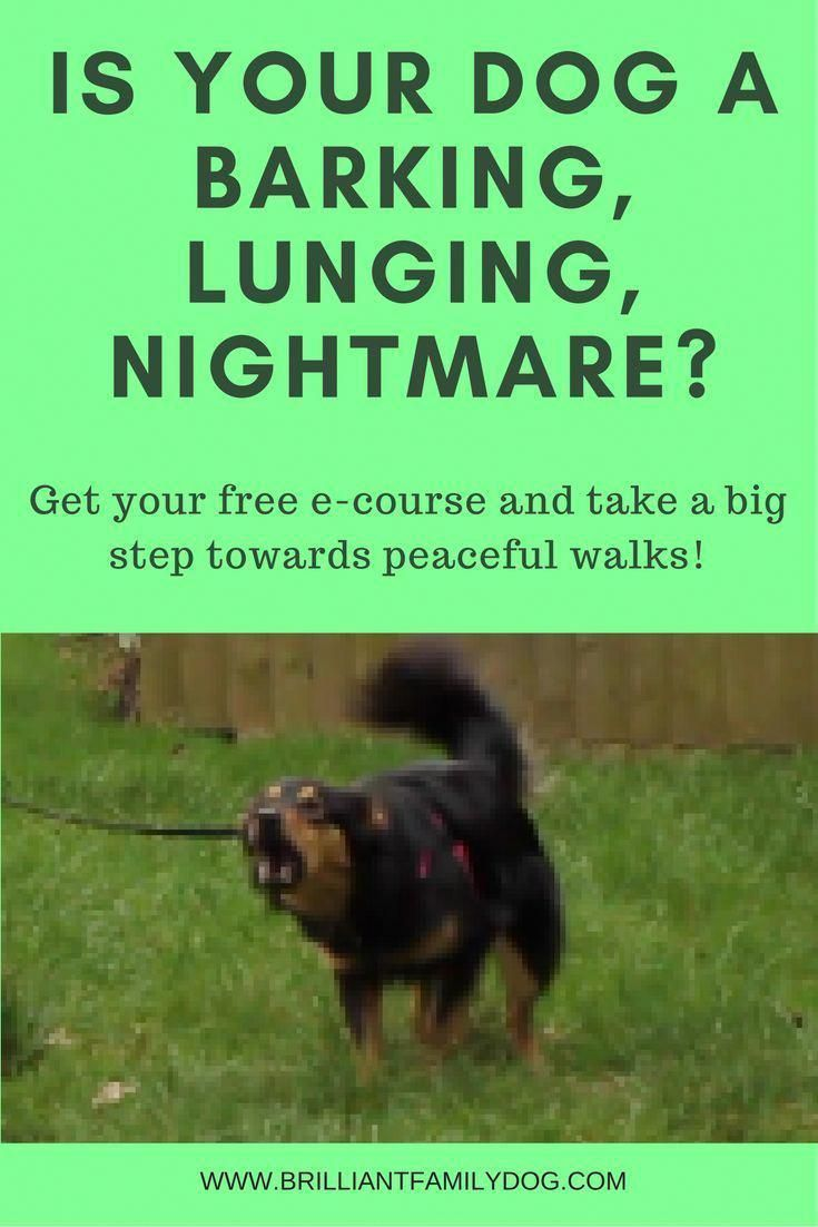 Communication on this topic: How to Keep a Dog from Lunging , how-to-keep-a-dog-from-lunging/