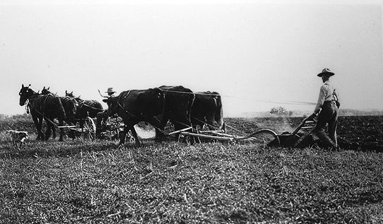 History of Agriculture - The Canadian Encyclopedia