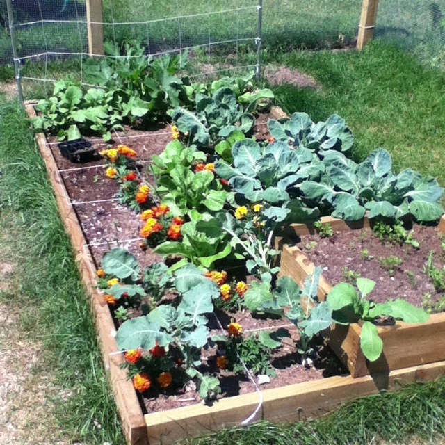 17 Best Images About Square Foot Gardening On Pinterest Garden Planner Raised Beds And 4x4
