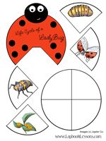 FREE Ladybug Life Cycle wheel lapbook