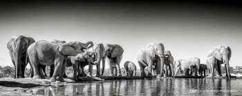 Around The Waterhole - Chris Grech Photography
