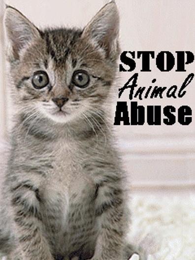 Stop animal abuse essay