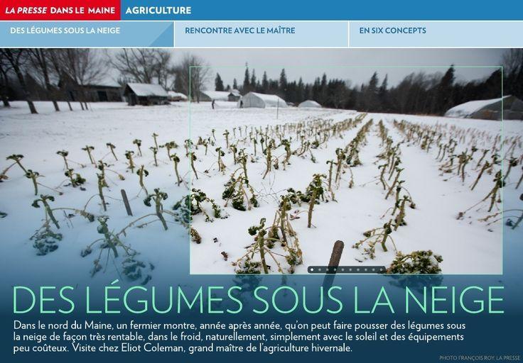 Dans le nord du Maine, un fermier montre, année après année, qu'on peut faire pousser des légumes sous la neige de façon très rentable, dans le froid, naturellement, simplement avec le soleil et des équipements peu coûteux. Visite &hel