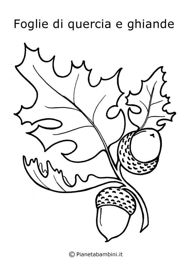 Ghiande e foglie di quercia