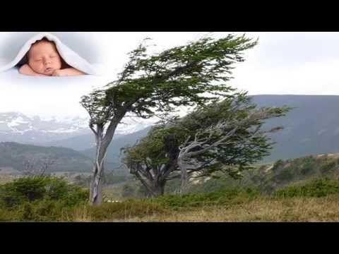 Vítr v korunách stromů - bílý šum spánku