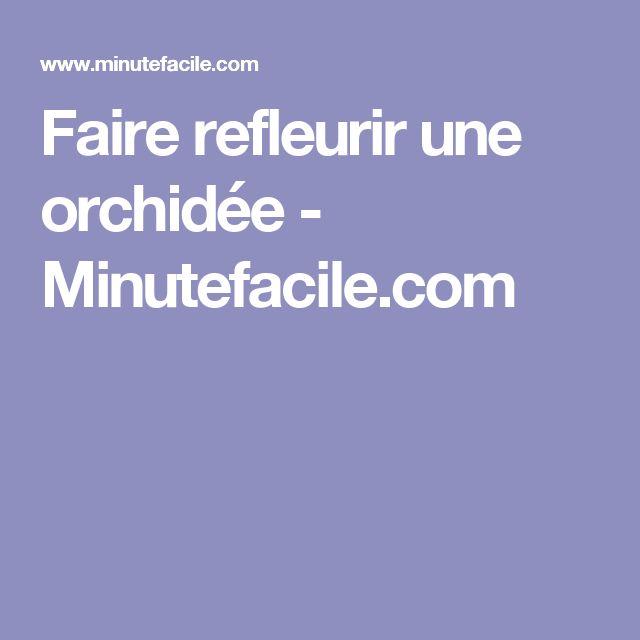 Faire refleurir une orchidée - Minutefacile.com