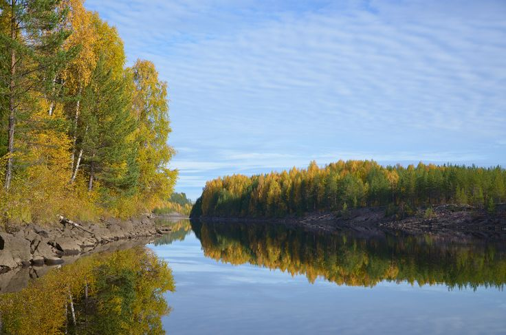 Forest in autumn colors reflecting in water, picture from the Northern Sweden.