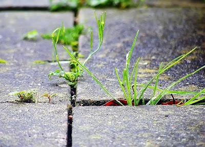 Try killing grass on sidewalks cracks with white vinegar.