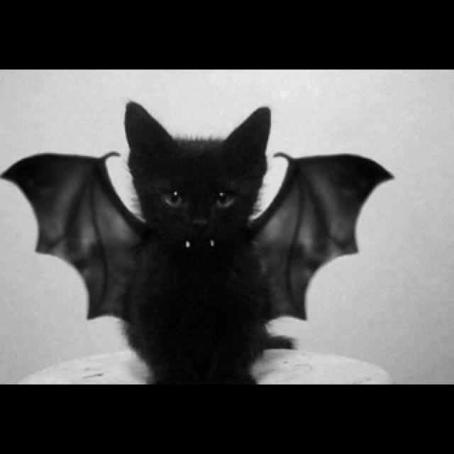 Scardey cat!