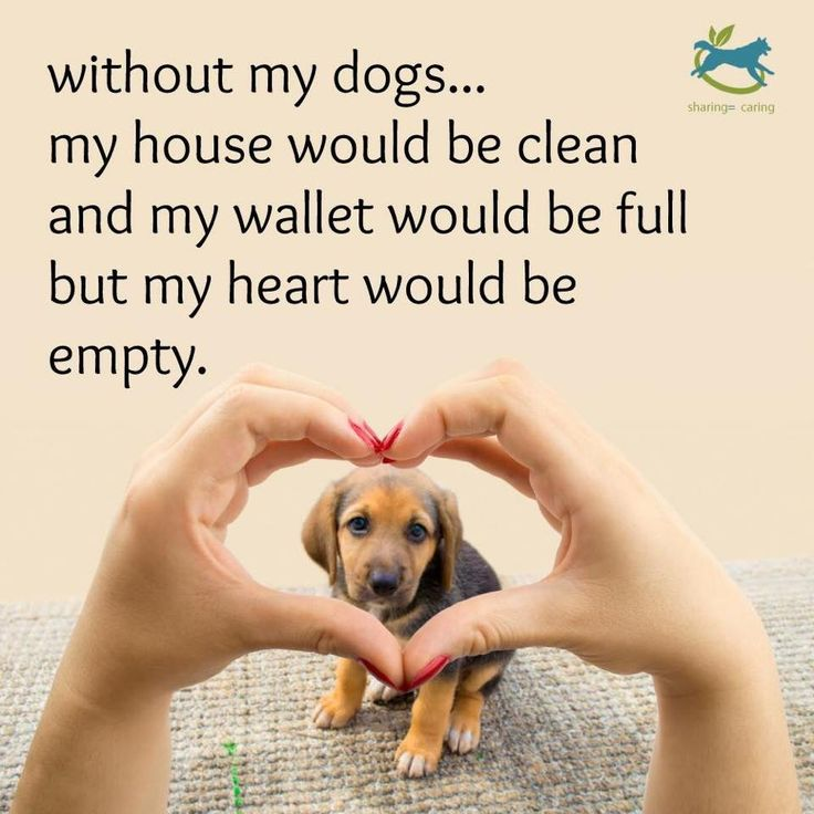 A house without a dog, is no home at all.
