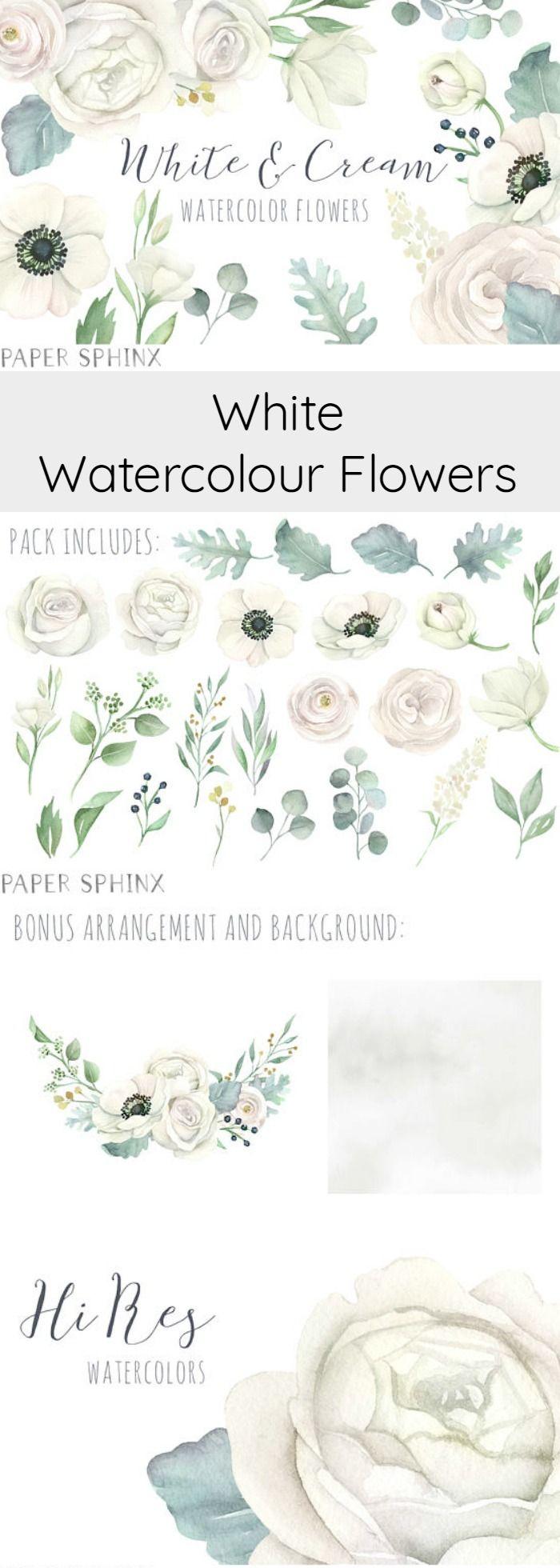 Best Botanical Floral Clipart images on Pinterest Water colors